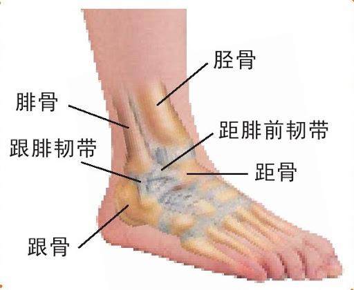 踝腓長肌管導膜(支持帶)修復